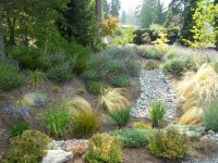 Free guides and rebates for building a rain garden in Seattle home landscapes