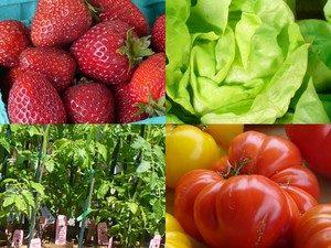 June crops 2 (Cancler)