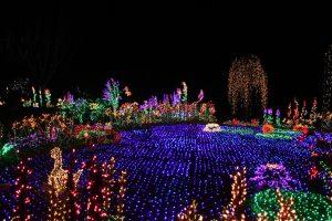 Bellevue Botanical Garden D'Lights