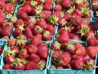 Free Seattle summer strawberry festivals in the Puget Sound region