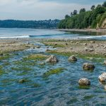 Visit Puget Sound beaches with volunteer guides and 'sea' wonders at low tide