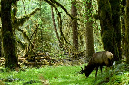 Washington State Olympic National Park - iStockPhotos.com