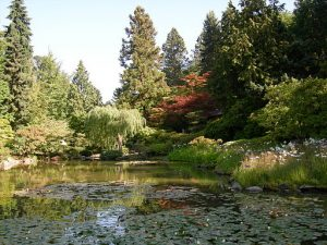 Washington Park Arboretum Japanese garden by Joe Mabel