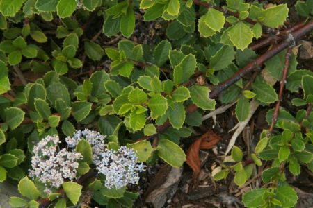 Washington State native plants