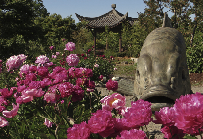 Enjoy self-guided garden tours of Seattle Chinese Garden with their downloadable tour materials