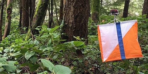 Cascade Orienteering flag