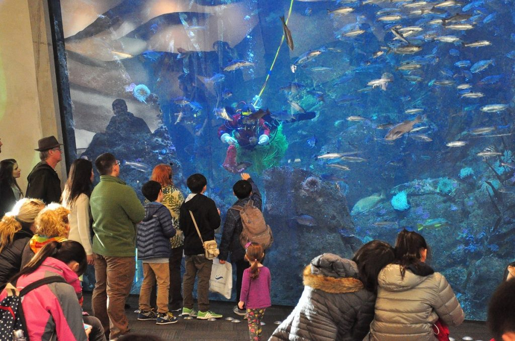 Seattle Aquarium 2015 photo by Joe Mabel (CC2)