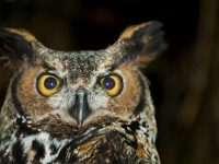 $10 night hike to see owls at Seward Park in Seattle