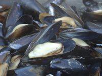 Getaway: MusselFest celebrates bivalves on Whidbey Island