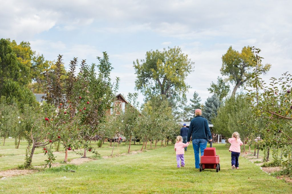 Young family strolling a u-pick apple farm