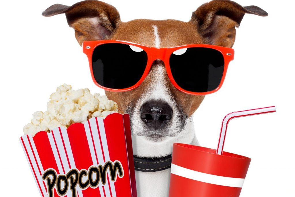 Dog at the movies with popcorn and soda