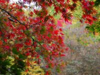 Best walks, getaways for fall color in Seattle and Western Washington