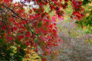 Washington Park Arboretum fall color October 2011 photo by epsilonimages (CC2)