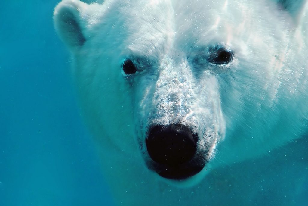 Polar bear - DepositPhotos.com