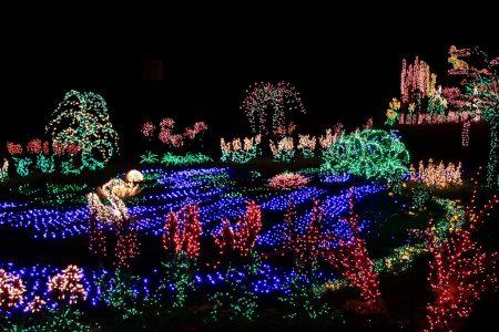 Bellevue Botanical Garden Christmas Garden D'Lights photo by Sean O'Neill (CC2)