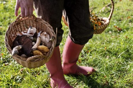 Food Forager Carrying Her Finds Home