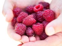Handful of fresh red raspberries