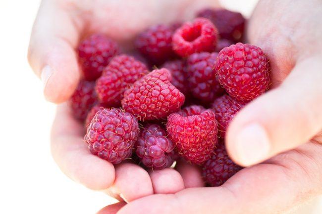 Handful of fresh red raspberries