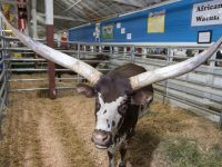 Discount tickets to WA State Fair in Puyallup
