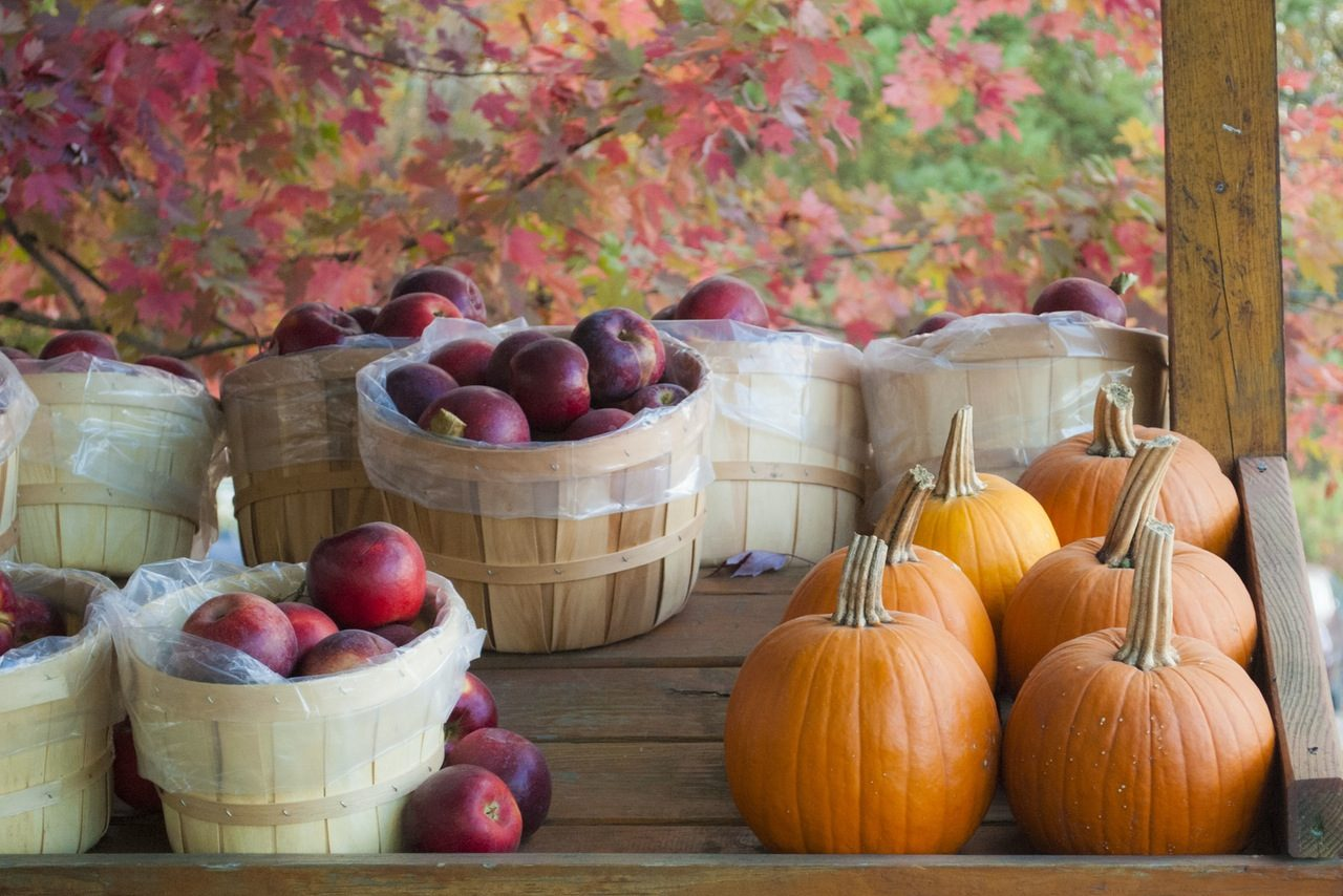 Free or cheap October festivals