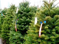 Christmas Tree Lot photo by valbunny - DepositPhotos.com