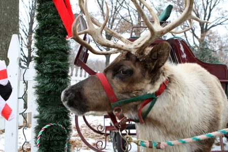 Reindeer photo by Marcotte24 - Depositphotos.com