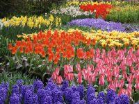 Depositphotos_2395479_l-2015 spring flowers photo by xdrew73