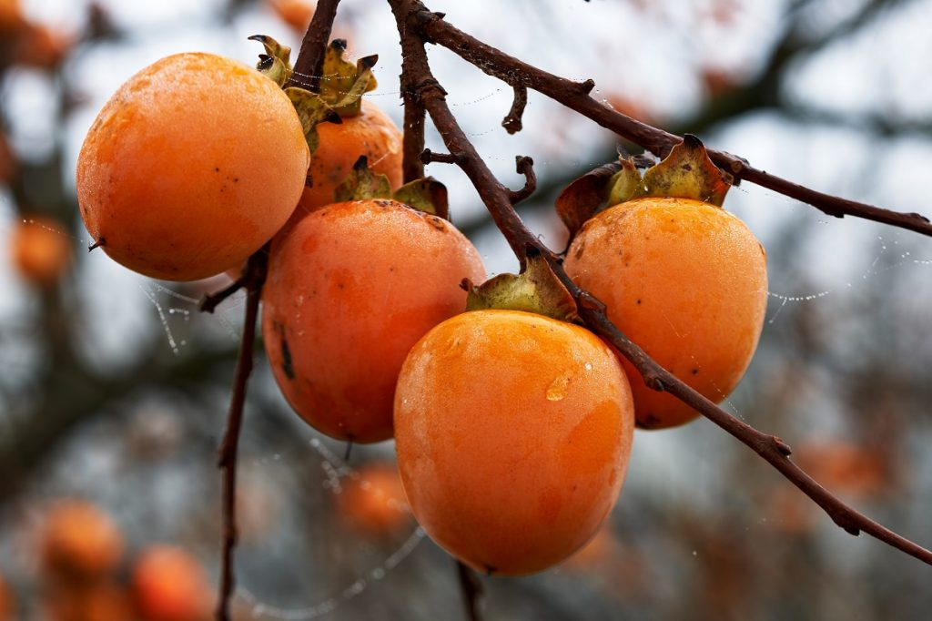Persimmon fruits photo by LuaAr - Depositphotos.com