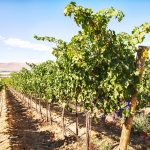 Guide to Washington State Wine Growing Regions