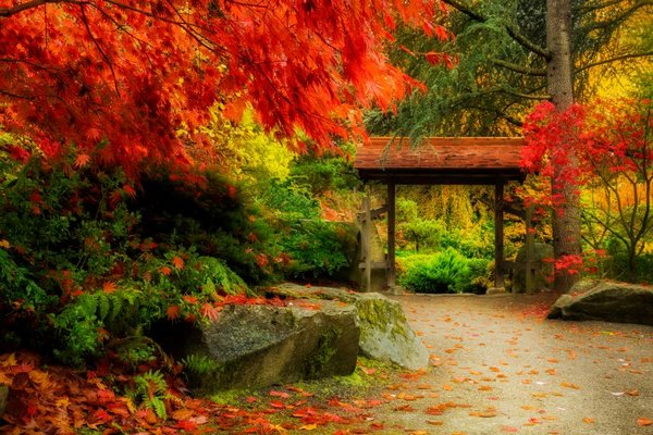 Seattle Japanese Garden maple trees in fall