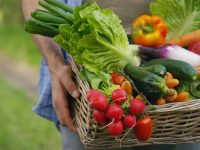 basket of farm produce