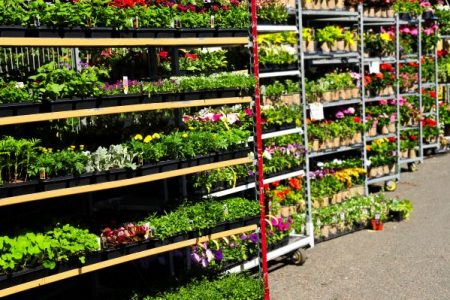 rack of plants for sale at garden store
