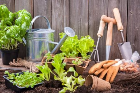 Gardening tools and vegetable starts