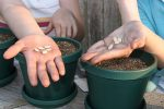Planting vegetable seeds in a container garden