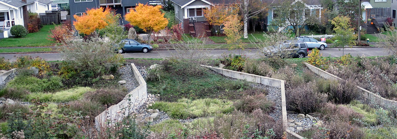 Rain garden at Maple Leaf Reservoir Park. Photo by Seattle Parks (CC2)