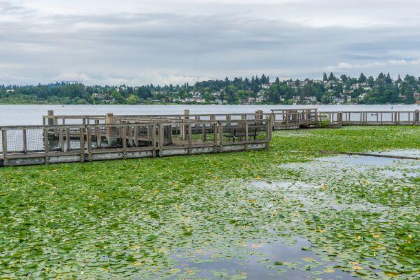 Seattle arboretum wooden walkway
