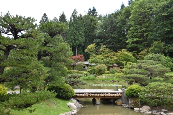 wooden bridge over a pond in Seattle Japanese Garden