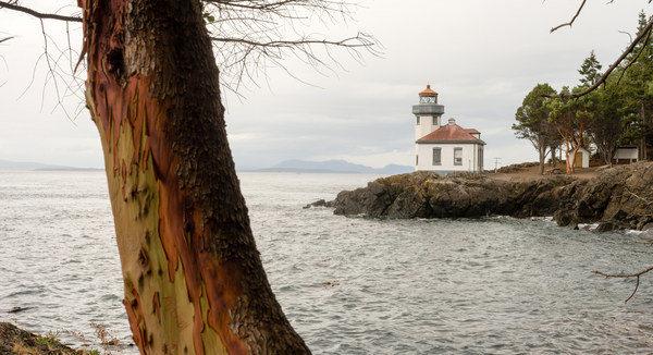 Madrona Tree frames Lime Kiln Lighthouse on San Juan Island overlooking Haro Strait