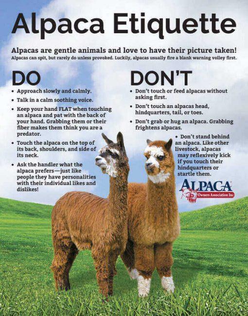 Alpaca Owners Associatoin (AOA) Alpaca Etiquette poster