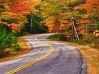 fall color on a country road