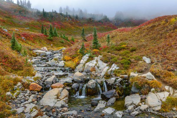 Edith Creek Fall Color Ian McRae (via VistiRainier.com)