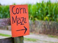 Corn mazes sign