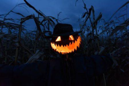 Scary Halloween pumpkin in a corn field at night