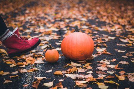 Woodland Park Zoo pumpkin loop walk