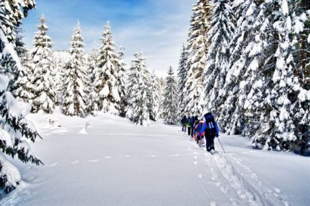 snowshoe hikers in a mountain forest