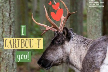 Northwest Trek Valentine card I CARIBOU-T YOU