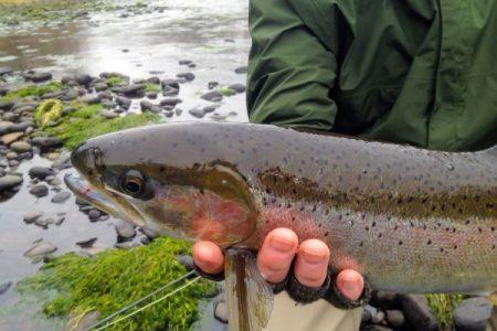 Fisherman holding steelhead trout