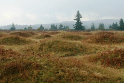WA DNR photo of Mima Mounds