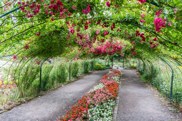 Rose arbor at Point Defiance Park in Tacoma
