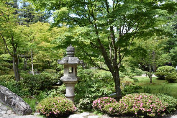 Seattle Japanese garden in spring
